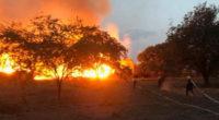 Incendio consumió 20 hectáreas de vegetación y decenas de animales en Yumbo, Valle
