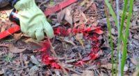 Cuatro militares resultaron heridos por explosión de mina antipersonal en el sur de Bolívar