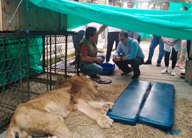 Fiscal General, Francisco Barbosa, llegó a Cali para visitar al león 'Júpiter'