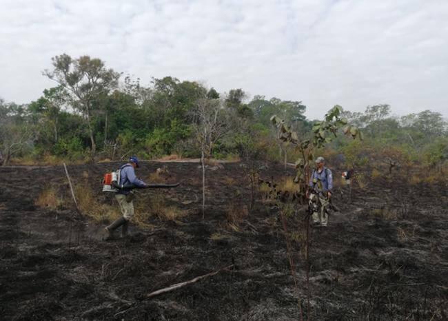 Al menos 1.160 hectáreas afectadas por incendio en el parque El Tuparro