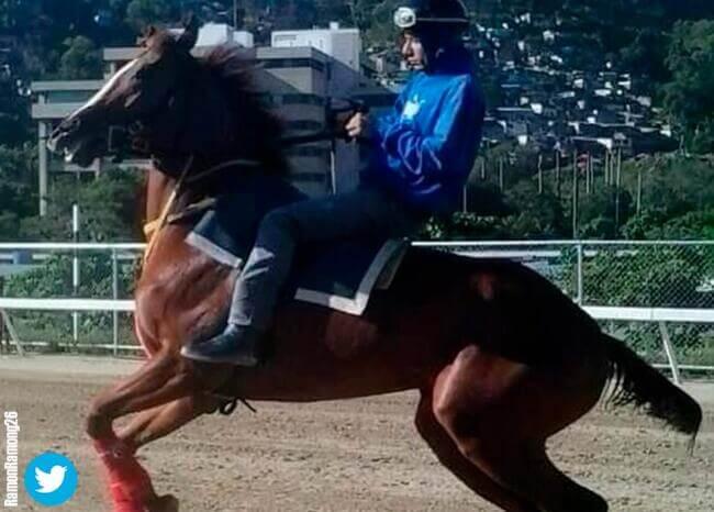 Descuartizan y se comen al caballo de carreras más famoso de Venezuela