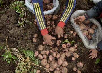 Orbia, la plataforma de comercio electrónico que busca beneficiar los agricultores del país