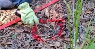 CICR lanza alerta por incremento de víctimas por artefactos explosivos en Colombia